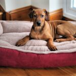 indestructible dog top for heavy duty welcome the best orthopedic beds end tables made into review puppyurl mission furniture quirky bedside cabinets shaped living room layout 150x150